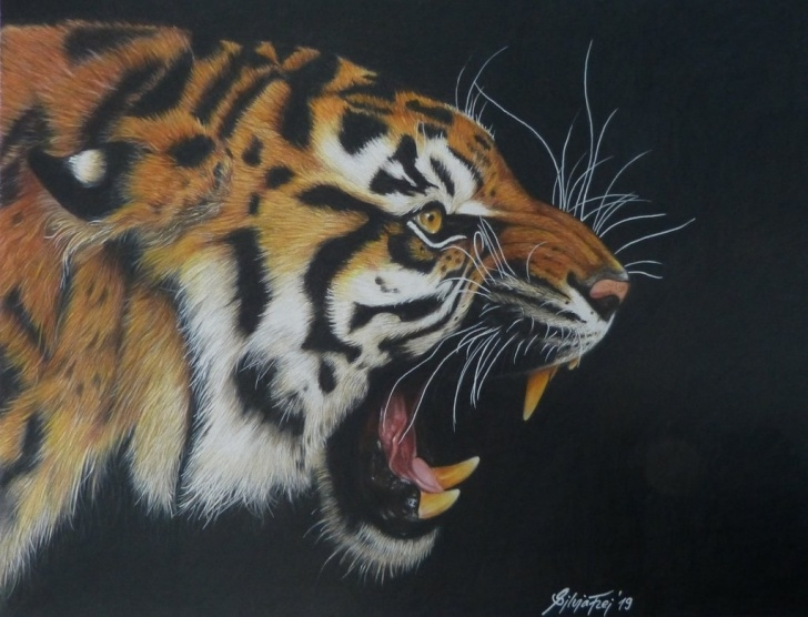 Good Tiger Colored Pencil Drawing Simple Roaring Tiger - Colored Pencil Drawing By Theartofsilviafrei On Images