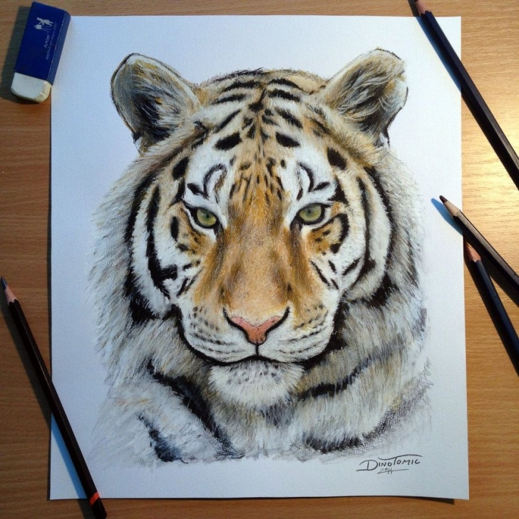 Good Tiger Colored Pencil Drawing Step by Step Tiger Pencil Drawing So Im Done With The Little Tiger Drawing Image