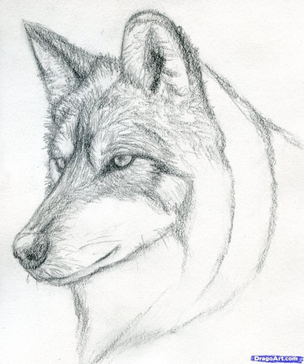 Good Wolf Pencil Art Tutorial Easy Pencil Drawings Step By Step Wolf Learn How To Draw A Wolf Head Picture