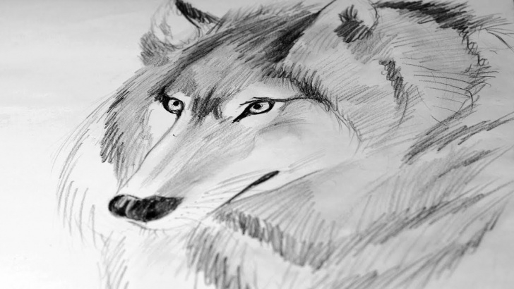 Good Wolf Pencil Sketch Tutorials How To Draw A Wolf Pencil #drawing | Wolf Face Sketch | Speed Drawing Of A  Wolf Picture