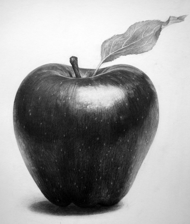 Gorgeous Apple Still Life Drawing Simple Drawing | Pencil Drawings In 2019 | Drawings, Graphite Art, Pencil Art Pictures