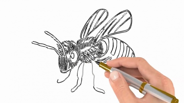 Gorgeous Bee Pencil Drawing Tutorials Bee Realistic Art Pencil Drawing | Draw Sketch Photo
