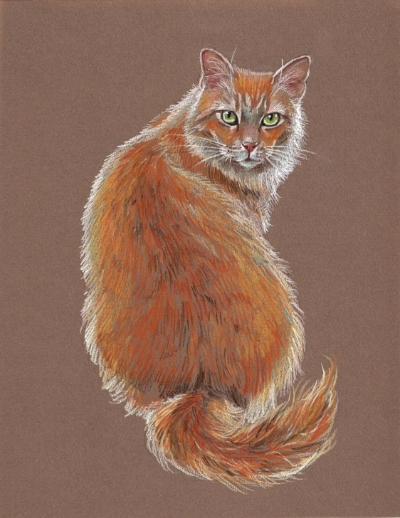 Gorgeous Colored Pencil Animals Courses Draw The Perfect Cat With These Easy Colored Pencil Tips | Animals Pic