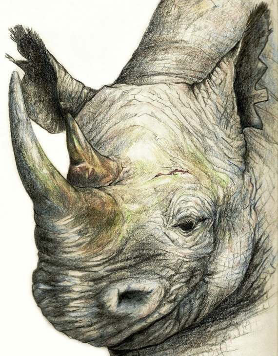Gorgeous Colored Pencil Animals Ideas One Of My First Wild Animal Color Pencil Drawings | Drawing And Images