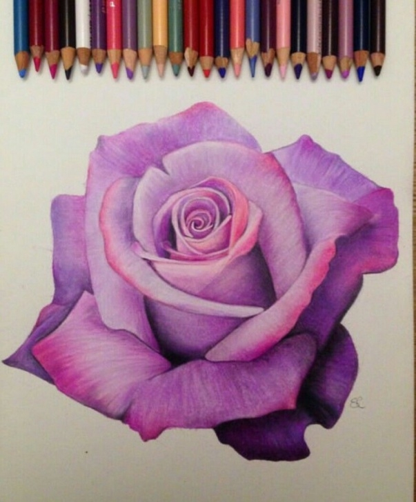 Gorgeous Colored Pencil Rose Simple Another Great Rose | Adult Coloring Pages In 2019 | Pencil Art Photos