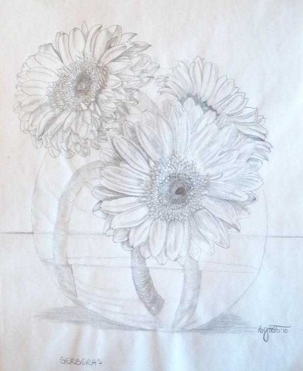 Gorgeous Daisy Pencil Drawing Simple Fresh Gerbera Daisies Pencil Drawing Pic