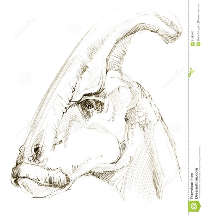 Gorgeous Dinosaur Pencil Sketch Courses Dinosaur. Dinosaur Drawing Pencil Sketch Stock Illustration Pic