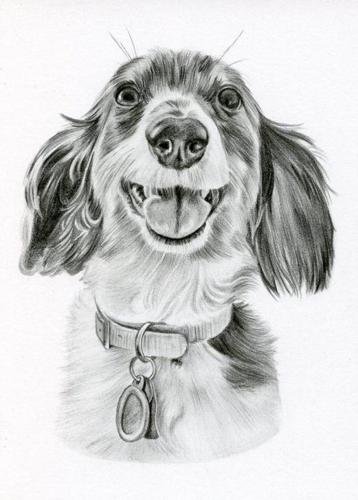 Gorgeous Dog Pencil Art Easy Custom Pencil Drawing, Size 5 X 7, Custom Pet Portrait, Custom Pet Drawing,  Dog Art, Dog Portrait, Dog Pencil Drawing, Graphite, Pet Art Image