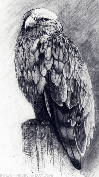 Gorgeous Eagle Pencil Art Step by Step Steppe Eagle, Pencil, A4 : Art Pics