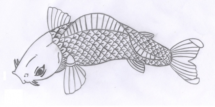 Gorgeous Fish Pencil Drawing Easy Free Fish Images Drawings, Download Free Clip Art, Free Clip Art On Pics
