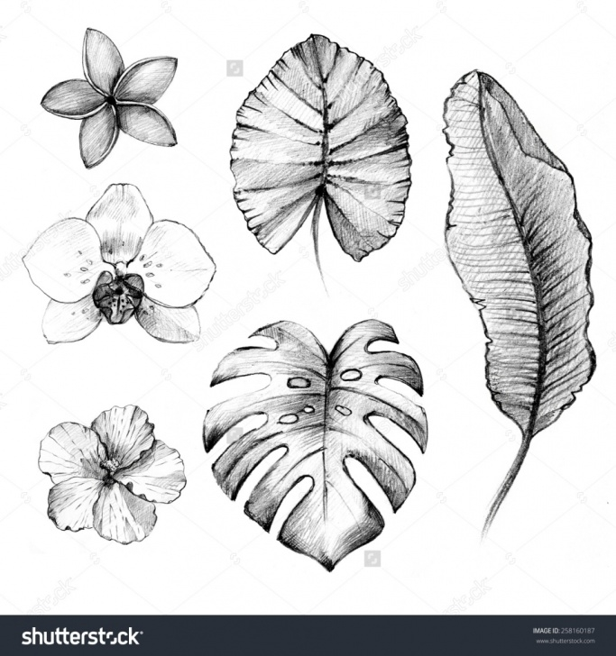 Gorgeous Floral Pencil Drawings Tutorials Floral Pencil Drawings And Floral Pencil Sketches Floral Pencil Photos