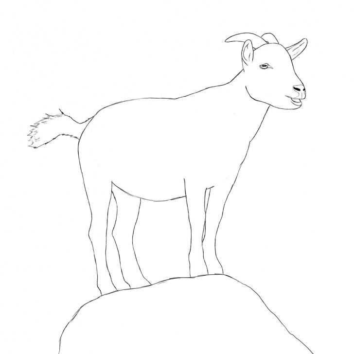 Gorgeous Goat Pencil Drawing Easy How To Draw A Goat | Draw Central | Goat Paintings, Drawings, Animal Picture