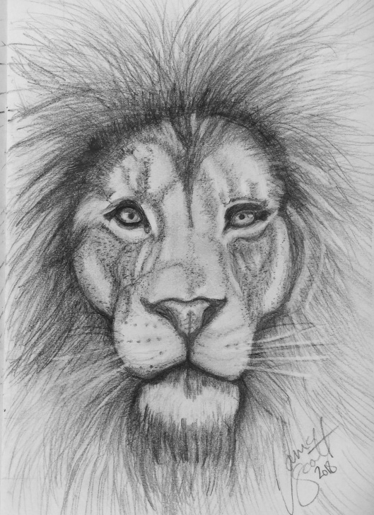 Gorgeous Hard Pencil Drawings Lessons Lion By Tania | Art Ideas And My Drawings And Techniques | Pencil Pic