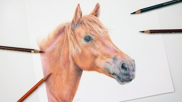 Horse Drawing Colored Pencil