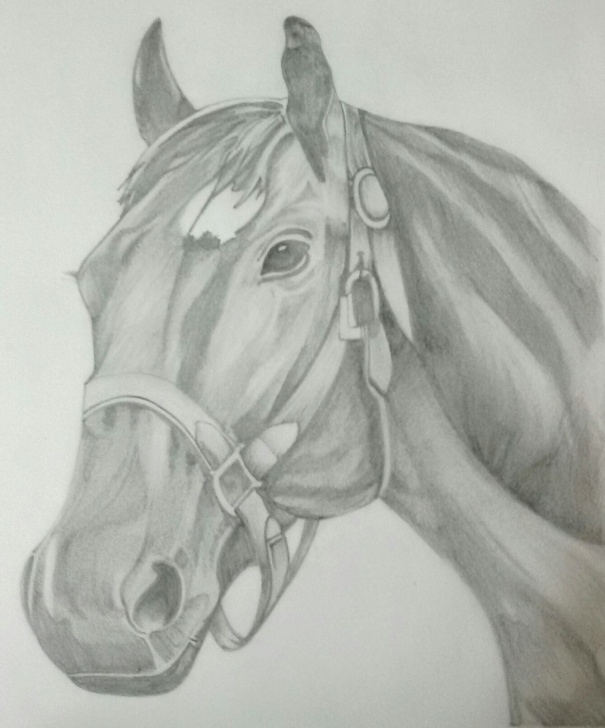 Gorgeous Horse Pencil Shading Ideas Horse.pencil Sketch | My Drawings In 2019 | Pencil Drawings Pic
