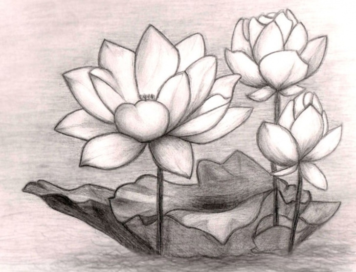 Gorgeous Lotus Pencil Drawing Tutorial Pin By Charly Teller On Art | Pencil Drawings Of Flowers, Flower Pic