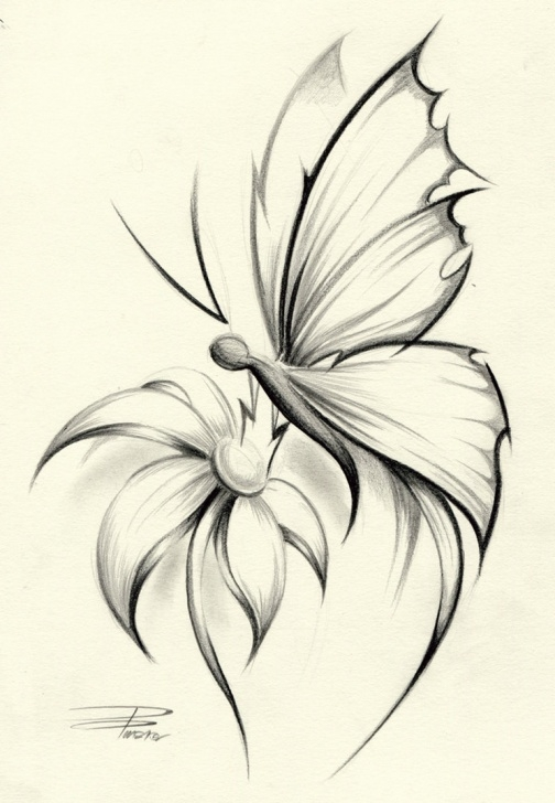 Gorgeous Pencil Drawing Of Free Butterfly On Flower Drawings In Pencil Drawing Of Sketch Jpg Photos