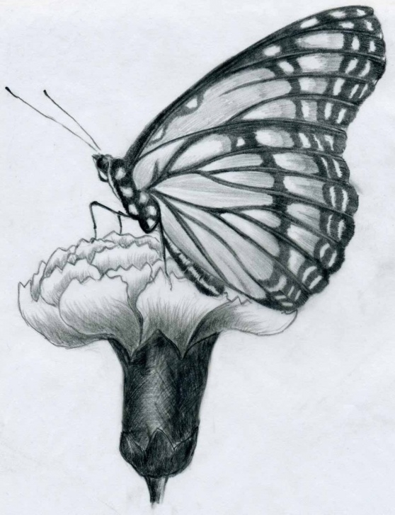 Pencil Drawings Of Flowers And Butterflies Step By Step