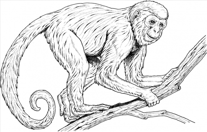 Gorgeous Pencil Sketch Of Monkey Easy Realistic Pencil Pencil Sketch Of Monkey Sketch Of Monkey Realistic Pictures