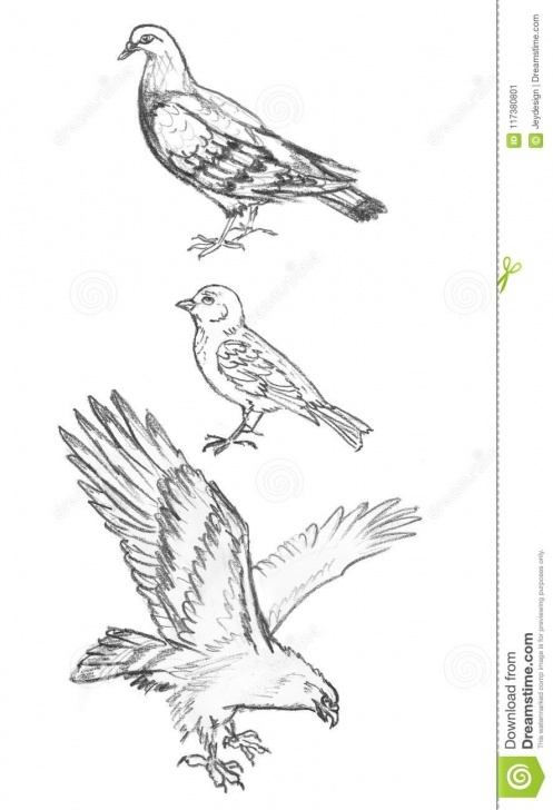 Gorgeous Pigeon Pencil Sketch Tutorial Pencil Sketch Of Birds, Hand Drawing Of Pigeon, Sparrow And Eagle Pic