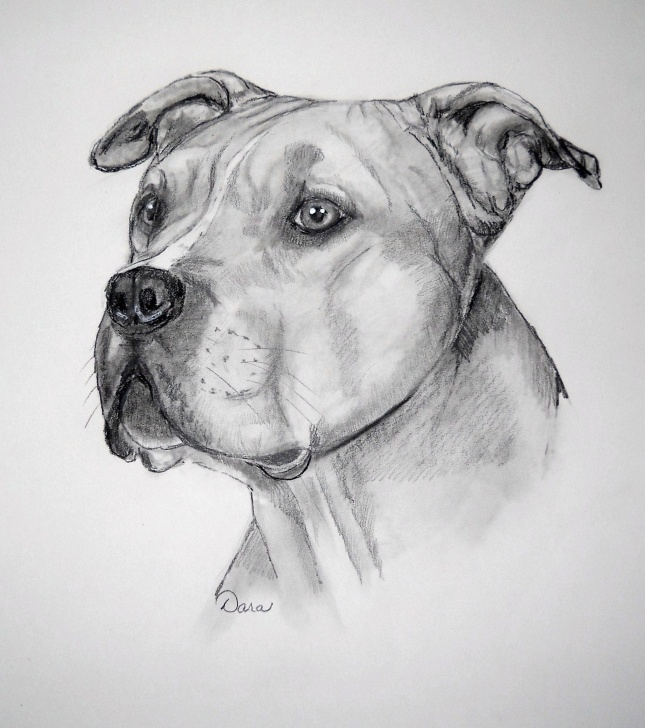 Gorgeous Pitbull Drawings In Pencil Easy American Pitbull Terrier | 100. Pitbull Art | Pitbull Drawing Pics