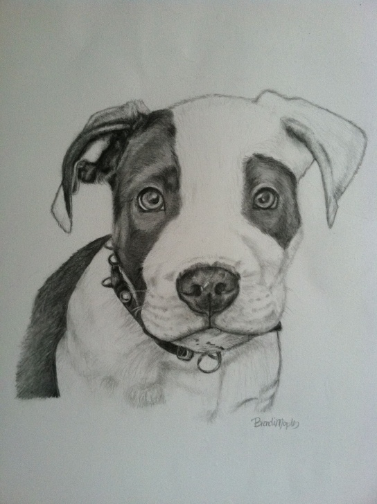 Gorgeous Pitbull Drawings In Pencil Lessons Pit Bull Puppy, Graphite Pencil | My Drawings & Sketches | Dog Pictures