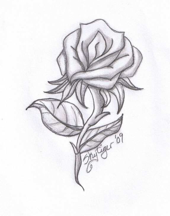 Gorgeous Rose Pencil Sketch Techniques for Beginners Rose Drawings | Rose Pencil Drawing By Skytiger On Deviantart Image