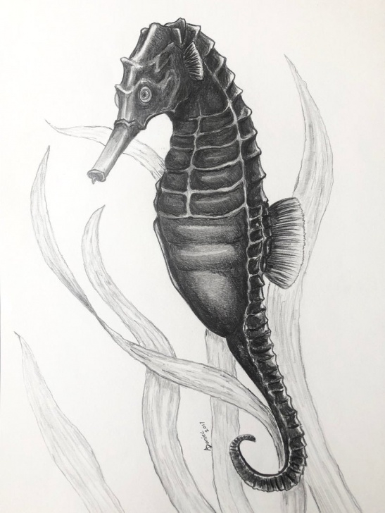 Gorgeous Seahorse Pencil Drawing Courses Seahorse Oryginal Pencil Drawing Nautical Art Photos