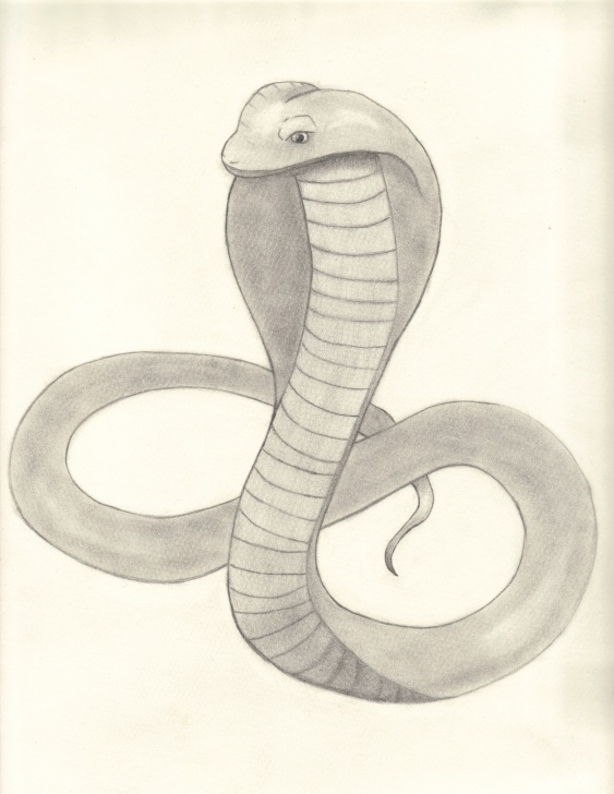 Gorgeous Snake Pencil Sketch Tutorials Snake Pencil Sketch Images And Pencil Drawings Of Snakes Cobra Photos