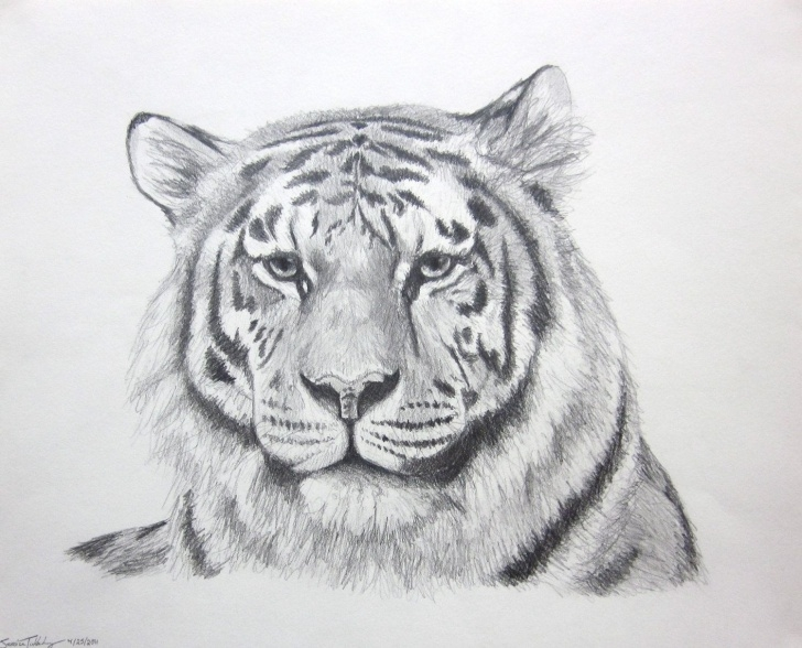 Gorgeous Tiger Face Drawing Pencil Step by Step Pin By Alesia Leach On Tiger In 2019 | Tiger Sketch, Pencil Drawings Picture