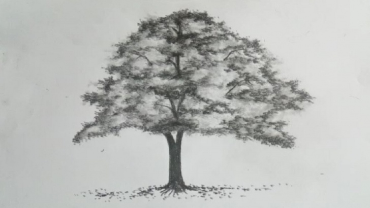 Gorgeous Tree Pencil Sketch Ideas Tree Drawing Easy - How To Draw A Tree With Pencil Sketch || Simple Tree  Drawing Pics