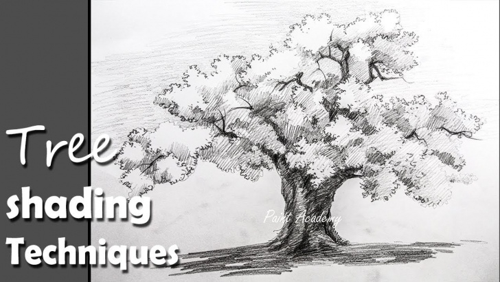 Gorgeous Tree Pencil Sketch Simple Pencil Drawing | How To Draw A Tree In Pencil With Proper Shading Techniques Image