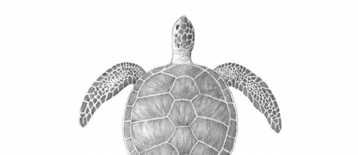 Gorgeous Turtle Pencil Drawing Easy Sea Turtle Pencil Drawing Coffee Mug Photos