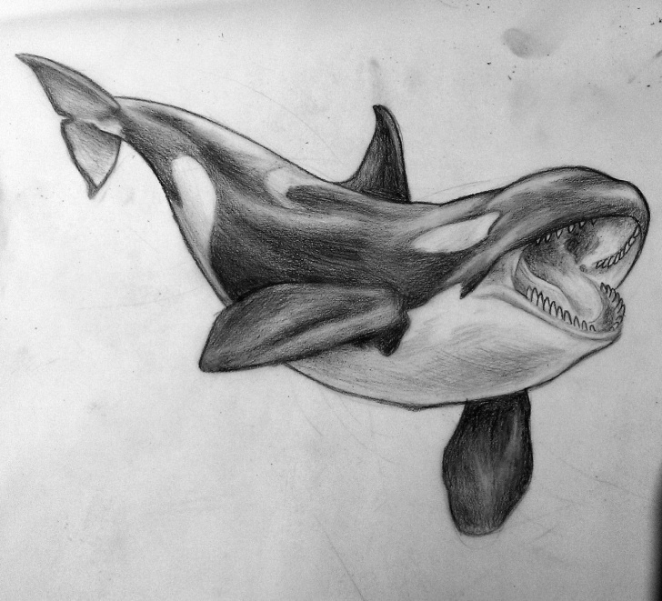 Gorgeous Whale Pencil Drawing Simple Killer Whale Drawing |  , Its From A While Ago - Sketch Of A Pic