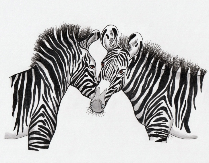Gorgeous Zebra Pencil Drawing Techniques for Beginners How To Draw A Grevy's Zebra Tutorial Photo