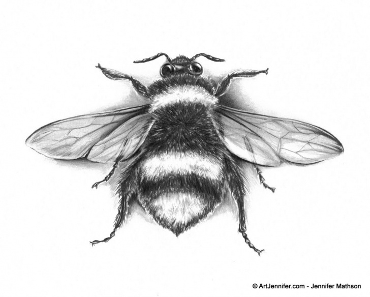 Incredible Bee Pencil Drawing Simple Bee Scientific Drawing | Amazing Wallpapers | Gift Ideas Photo