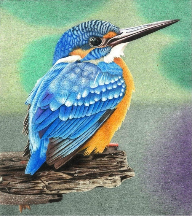 Incredible Bird Colored Pencil Simple Kingfisher Colored Pencil Drawing By Alienoffspring On Deviantart Pic