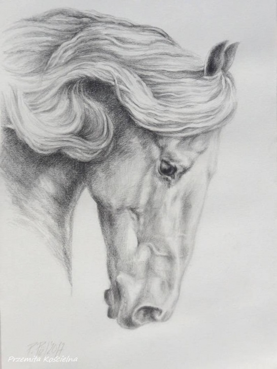 Incredible Black And White Pencil Drawings Tutorials Friesian Horse Pencil Drawing On White Paper Hand Drawn Horse Portrait  Black And White Horse Head Equestrian Art Gift For Horse Lover Picture