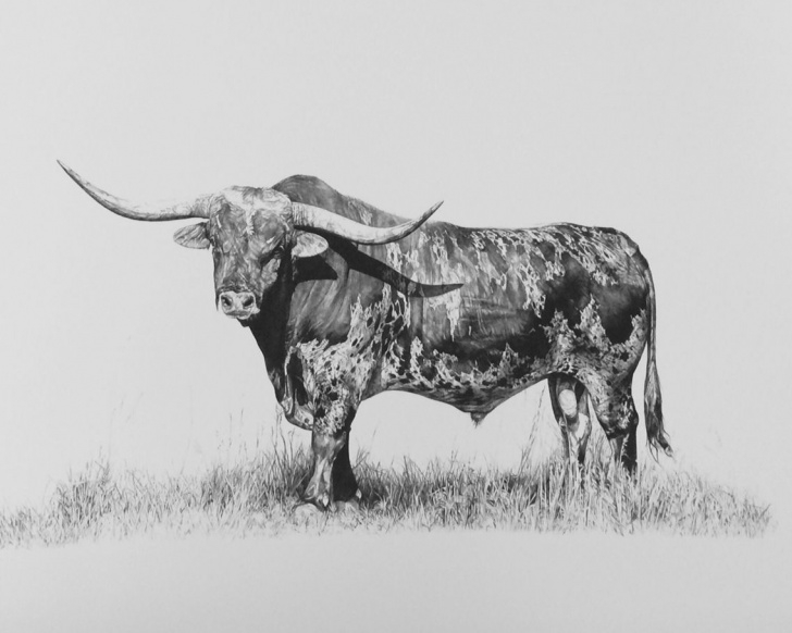 Incredible Bull Pencil Drawing Simple Texas Longhorn Pencil Drawing! | Paintings In 2019 | Pencil Drawings Picture
