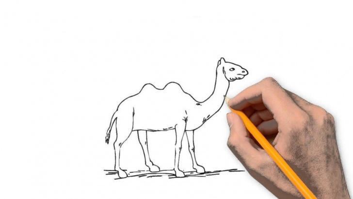 Incredible Camel Pencil Drawing Easy Camel Animals Pencil To Draw Step By Step Pic