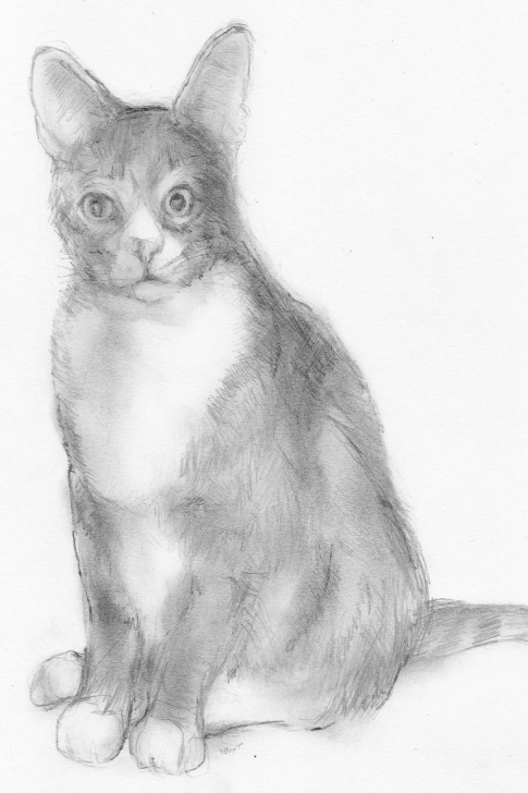 Incredible Cat Pencil Drawing Easy Murray Myler Cat: Pencil Drawing On Paper Photo