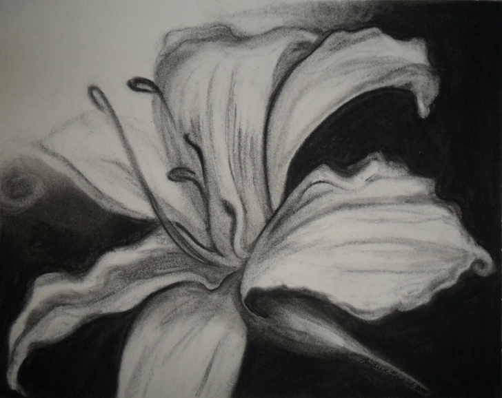 Incredible Charcoal Flower Drawings Lessons Image Detail For -Charcoal On Paper | Art- Drawing/painting Flowers Picture