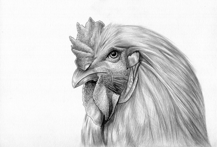 Incredible Chicken Pencil Drawing Step by Step Pin By Casey York On Drawing.animals | Pencil Drawings, Drawings Image