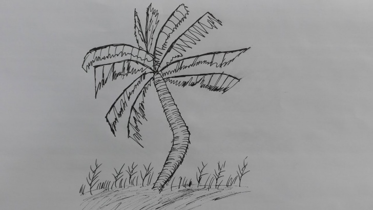 Incredible Coconut Tree Pencil Drawing Step by Step How To Draw A Coconut Tree-Pencil Drawing Of Coconut Tree-Coconut Tree  Drawing Picture Pics