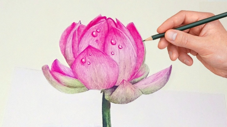 Incredible Colour Pencil Sketches Flowers Easy 7:48 Drawing A Lotus Flower With Simple Colored Pencils | | Art Pics