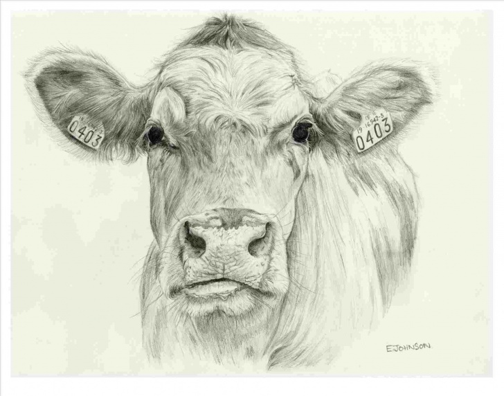Incredible Cow Pencil Drawing Free Pencil Drawings Of Cows | Drawing Work Picture