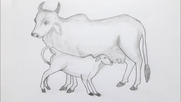 Incredible Cow Pencil Drawing Tutorials Cow And Cattle Drawing Easy Way/ Cow Sketching By Pencil Photo