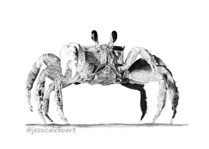 Incredible Crab Pencil Drawing Simple Graphite Drawings | Graphite Pencil Drawings | Drawings, Graphite Photos