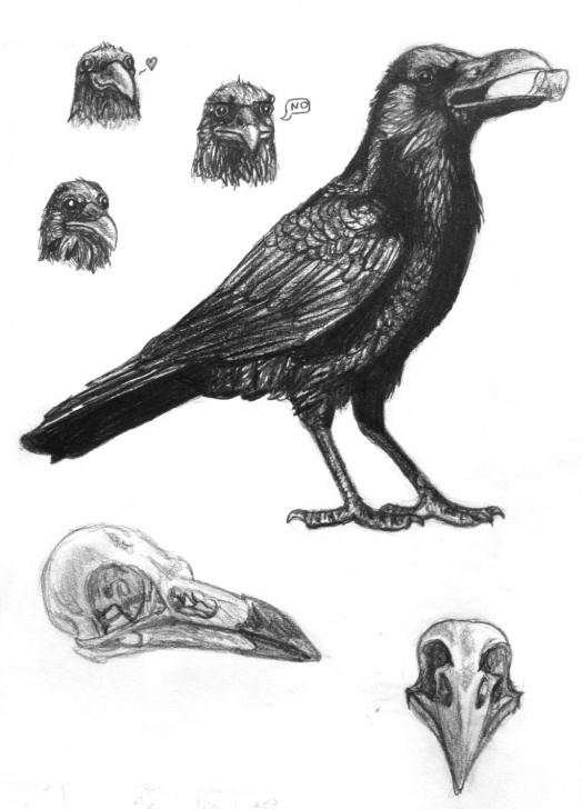 Incredible Crow Pencil Sketch Easy Crow Drawing, Pencil, Sketch, Colorful, Realistic Art Images Picture
