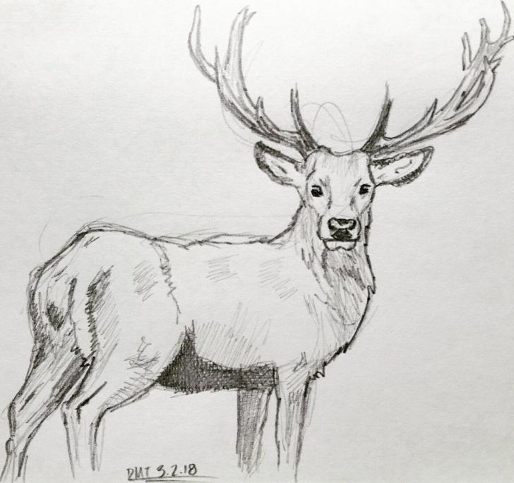 """Incredible Deer Pencil Sketch Easy Dmt On Twitter: """"#deer #pencil #sketch #sketchbook Picture"""